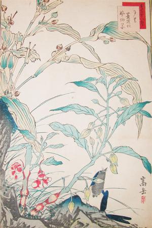 Sugakudo: Ruri Bird and Reeds - Ronin Gallery