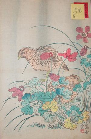 Sugakudo: Quails and Odamaki - Ronin Gallery