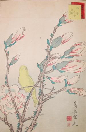 Sugakudo: Canary and Magnolia - Ronin Gallery