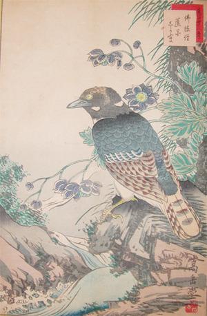 Sugakudo: Buppozo Bird and Shiyoyama - Ronin Gallery
