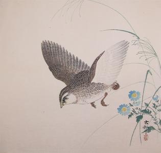 Koson: Quail in Flight - Ronin Gallery