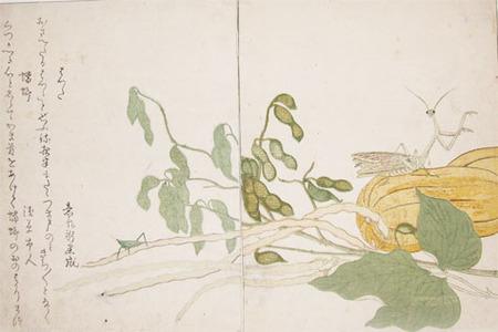 Kitagawa Utamaro: Cone-headed Grasshopper and Praying Mantis - Ronin Gallery