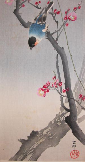 Koson: Bullfinch on Flowering Plum Tree - Ronin Gallery