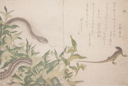 Kitagawa Utamaro: Snake and Green Lizard - Ronin Gallery
