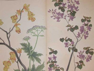 Sakai Hoitsu: Chinese Redbud、Spike Winter Hazel and Valeriana - Ronin Gallery