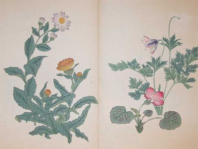 Sakai Hoitsu: Marigold,Pulsatilla Cernua and Philadelphia Dai - Ronin Gallery