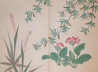 Sakai Hoitsu: Willow and Primrose - Ronin Gallery