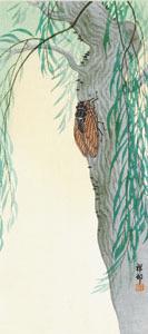 Shoson: Cicada - Ronin Gallery