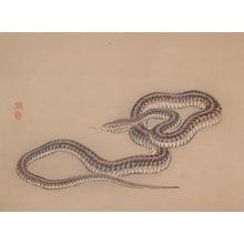 Kono Bairei: Snake - Ronin Gallery
