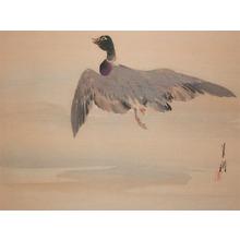 Gekko: Flight of a Duck - Ronin Gallery