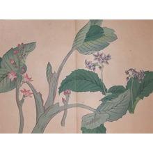 酒井抱一: African Violet and Buckbean - Ronin Gallery