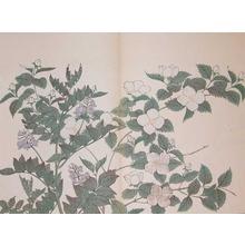 酒井抱一: Japanese Kerria and Chinese Liquorice - Ronin Gallery