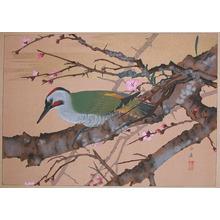 Rakuzan: Early Spring: Red Plum and Green Woodpecker - Ronin Gallery