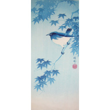 Shoson: Blue Robin on Maple branch - Ronin Gallery