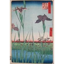 Utagawa Hiroshige: Iris Garden at Horikiri - Ronin Gallery