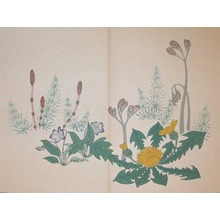 酒井抱一: Bracken, Dandelion, Violet and Horsetails - Ronin Gallery