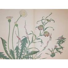 酒井抱一: Dandelion, Bell Flower、Chinese Spiranthe、Fri - Ronin Gallery