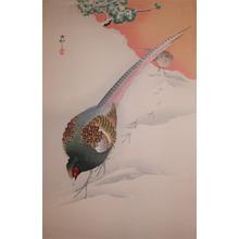 Koson: Pheasants in Snow - Ronin Gallery