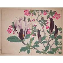 酒井抱一: Cherry and Magnolia - Ronin Gallery