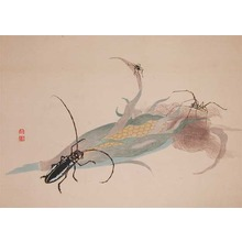 Watanabe Shotei: A beatle and spiders on a corn cob - Ronin Gallery