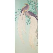 Shoson: Birds of Paradise - Ronin Gallery