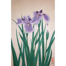 Ito, Nisaburo: Iris - Ronin Gallery