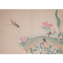 Watanabe Shotei: Cone-headed Grasshopper, beatles and ants. - Ronin Gallery