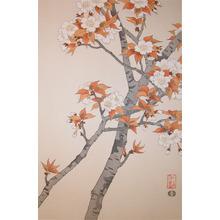 Nisaburo: Cherry - Ronin Gallery