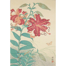 Shoson: Tiger Lilies and Butterfly - Ronin Gallery