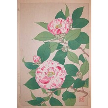 Shodo: Camellia - Ronin Gallery