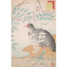 Sugakudo: Ban Bird and White Wisteria - Ronin Gallery
