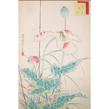 Sugakudo: Sparrows and Poppies - Ronin Gallery