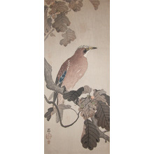 Koson: Jay on Oak Branch - Ronin Gallery
