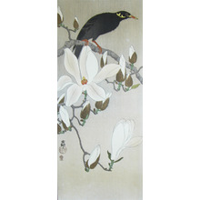 Koson: Myna on Magnolia Branch - Ronin Gallery
