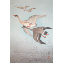 Shoson: Wild Geese - Ronin Gallery