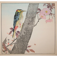 静湖: Woodpecker and Cherry Tree - Ronin Gallery