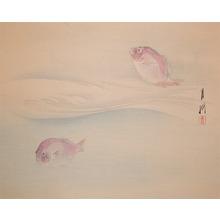Gekko: Pink Snapper - Ronin Gallery