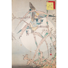 Sugakudo: Chidori Birds and Reeds - Ronin Gallery