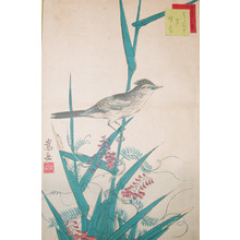 Sugakudo: Yoshikiri Bird, Reeds and Nofuji Flowers - Ronin Gallery