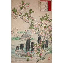 Kono Bairei: Cherry Blossoms and Sea Gulls - Ronin Gallery