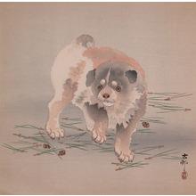 Koson: Puppy - Ronin Gallery