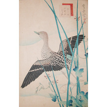 Sugakudo: Gray Tailed Tattler and Morning Glories - Ronin Gallery