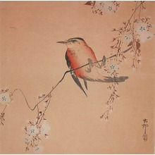 Koson: Small Songbird Hanging from Blossoming Cherry - Ronin Gallery