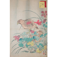 Sugakudo: Quails and Odamaki - Ronin Gallery