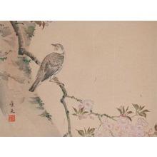 松村景文: Bird on Flowering Cherry Branch - Ronin Gallery