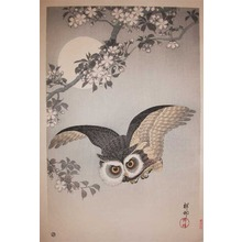 Shoson: Scops Owl Flying Under Cherry Blossoms - Ronin Gallery