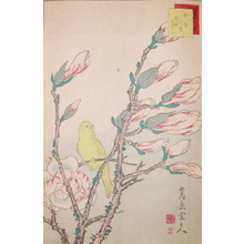 Sugakudo: Canary and Magnolia - Ronin Gallery