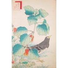Sugakudo: Kurotsugumi and Chinese Lantern Plant - Ronin Gallery