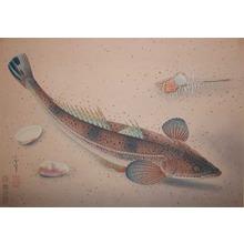 Bakufu: Kochi Fish - Ronin Gallery