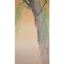 Koson: Cicada on Willow Tree - Ronin Gallery